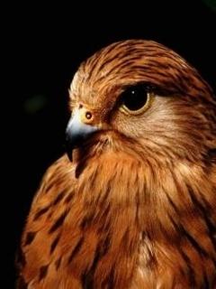 красивые фото орла с раскрытыми крыльями